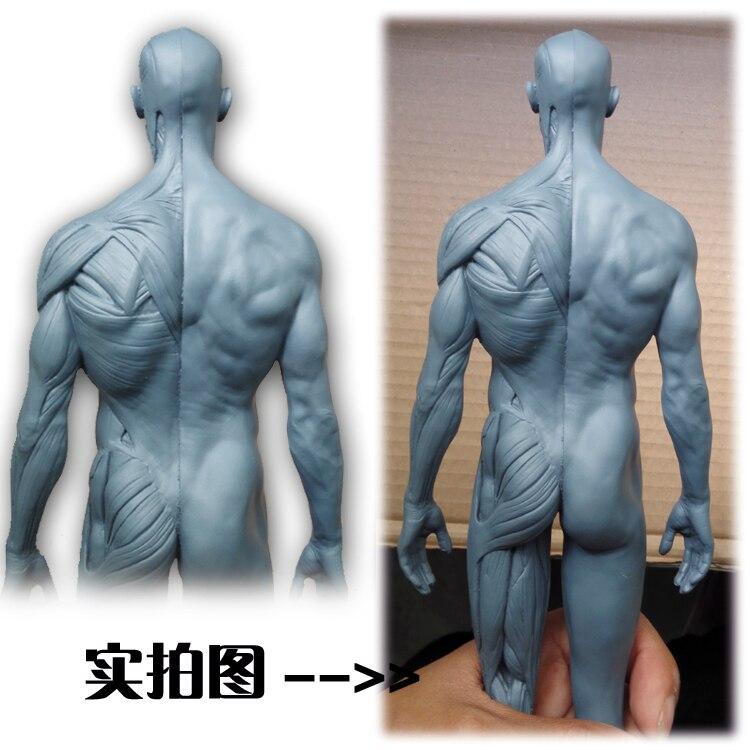 30 cm menschliches skelett Anatomie anatomisches modell werkzeuge ...