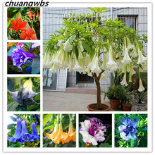 Datura flower Tropical Plants aromatic White Angels Trumpet indoor bonsai for home garden-50pcs/bag