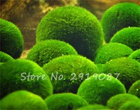 Free-Shipping-Mixed-Water-Grass-Seeds-Aquarium-Plant-Seeds-Fish-Tank-Ornamental-Lawn-Aquatic-Plants-Seeds.jpg_200x200