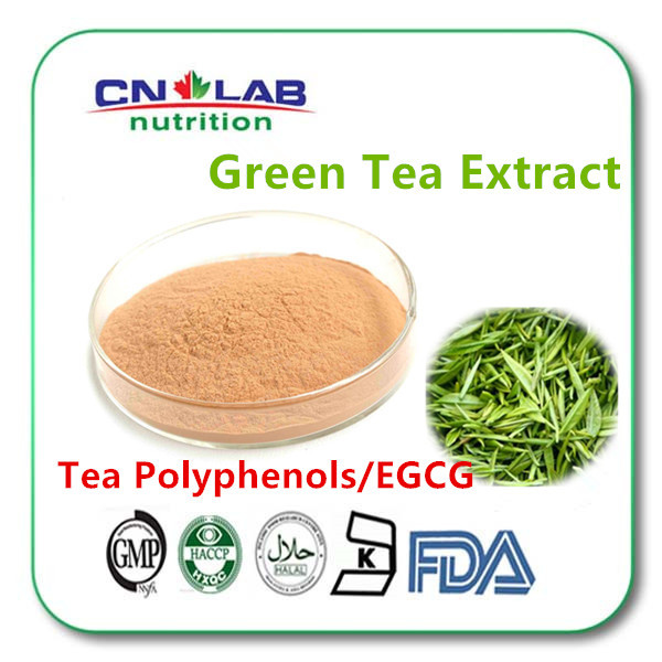 High quality for 150g Green Tea extract Powder