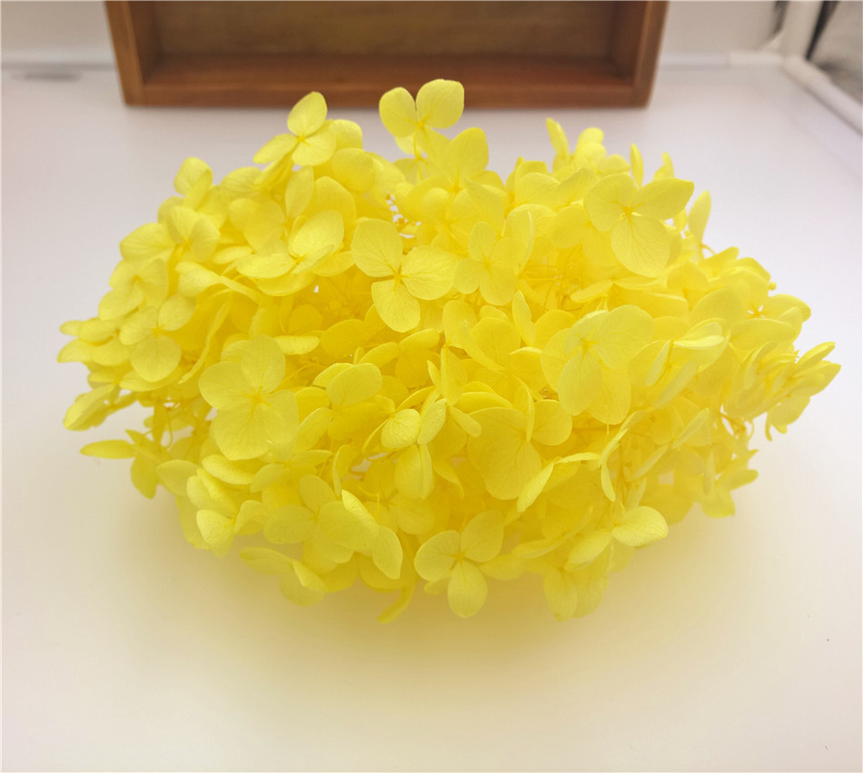 200 Pieces Light Yellow 522740mm Box Small Leaf Hydrangea Dried