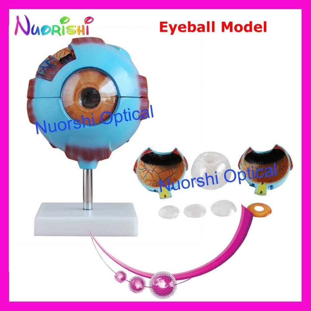 E4603 Freies Vergrößerung Modell Menschlicher Verschiffen Augapfel Anatomische Eyeball 6x A0Aqpwfxr