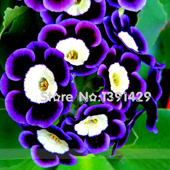 compare prices on plants flowers names online shopping/buy low, Beautiful flower