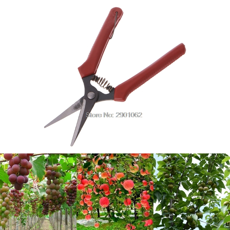 Free Postage Carbon Steel Head Gardening Scissors Cutting Branch Shears Bypass Pruner  AP16(China)