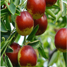 10 pcs/bag giant Red Jujube Seeds Delicious Nutrition Fruit Seeds Rare Exotic Bonsai Potted Gift Plant Decoration Home & Garden