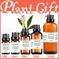 100% pure plant Herbal medicine oils Aeruginous Turmeric Rhizome herbal oil Rhizoma curcumae Zedoary turmeric,Curcuma zedoaria