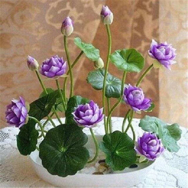 5 Particle Pack Pink Red Purple Lotus Flower Aquatic Plants Bowl