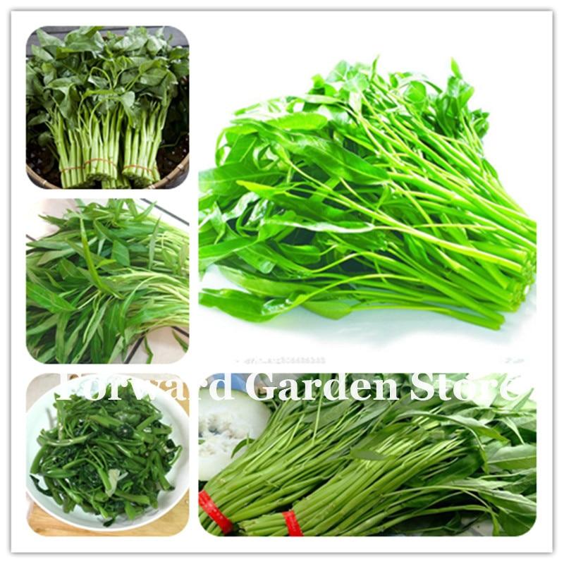 Perennial Celery 2016 Seeds Plants World Test Vegetable Bonsai Garden 200pcs