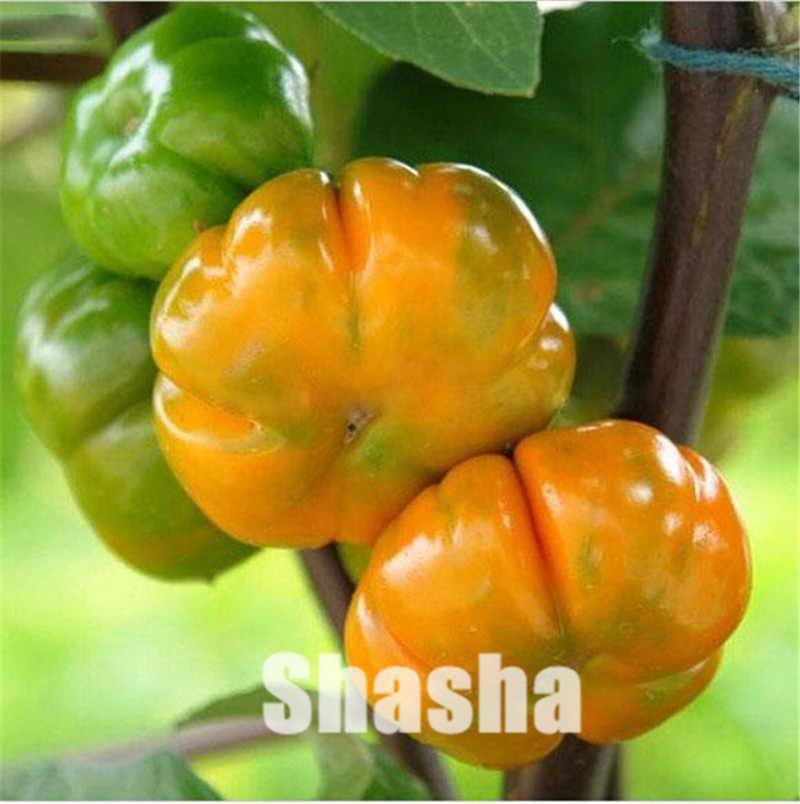 200 unids/bolsa plantas de berenjena mezcladas-perfume importado, plantas de bonsái no GMO orgánico ruso para el hogar y el jardín