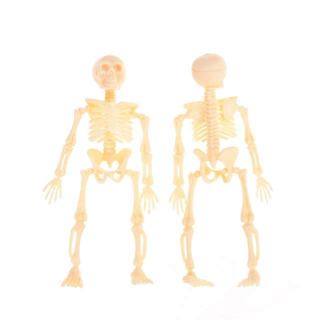 Halloween móvil Mr. huesos esqueleto humano modelo cráneo completo ...