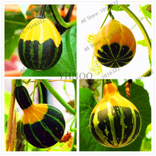 30 pcs pumpkin seeds RARE chinese rainbow bulb vegetable seeds,exotic seeds,herb mini bonsai planter home  garden