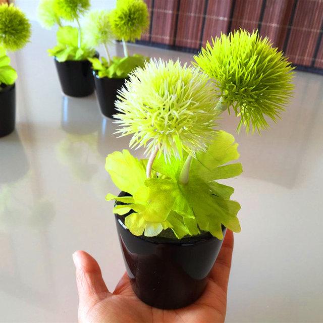 Dandelion Seeds, Taraxacum Seeds, 50pcs/pack