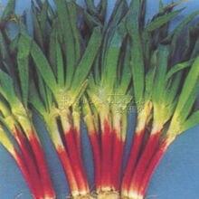400 Red beard Bunching Onion Seeds~Vegetable