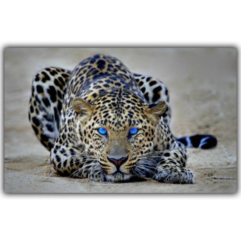 Prairie Animal Leopard Landscape