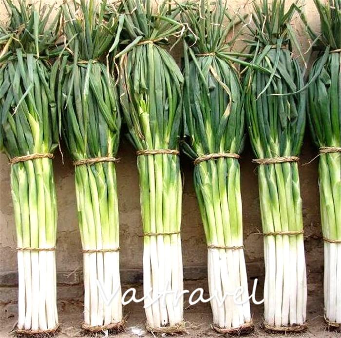 gigante chino cebolla vegetales de cocina popular variedad fcil de cultivar a