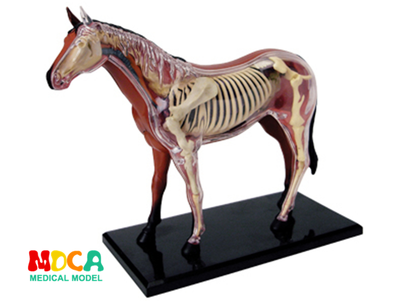 Horse 4d master puzzle Assembling toy Animal Biology organ anatomical model medical teaching model 4d master cat puzzle assembling toy animal biology organ anatomical model medical teaching skull skeleton model science toys
