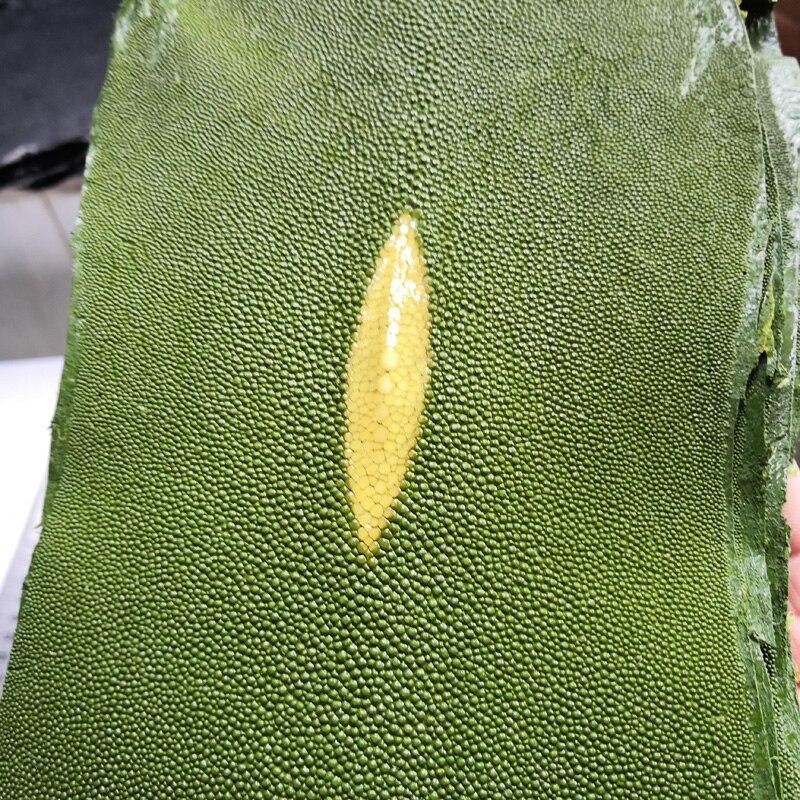 Junetree Genuine Stingray Skin Leather Hide Pelt Grained Large Big Size Natural Manta Ray Fish Skin Green