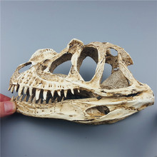MRZOOT Dinosaur Skull Skeleton Model Specimen Animal Home Decoration Accessories Personalized Statue Sculpture