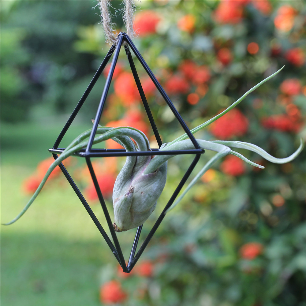 Freestanding hanging planter metal double diamond shaped for Geometric air plant holder