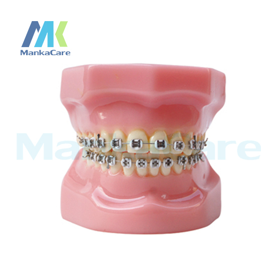 Manka Cuidar-28 pcs Dente, todo o suporte de metal Modelo Modelo Dente Dentes Orais