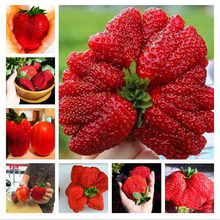 New Store Discount New 300pcs 100% Germination Super Giant Big Strawberry Apple Size Home Garden Bonsai Plants Edible Nutritious(China)