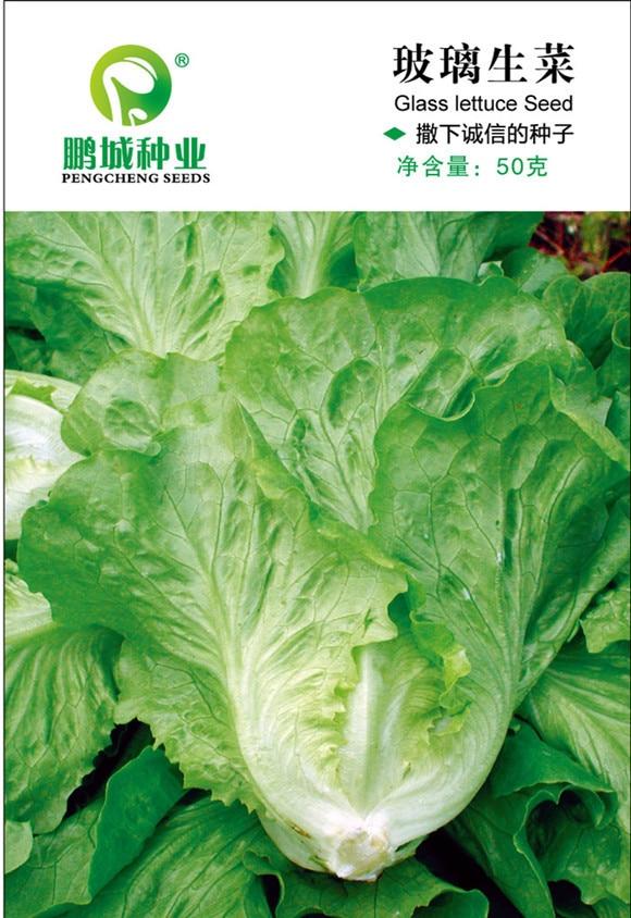 Free Shipping Garden lettuce Seeds Vegetables10g/bag Gl