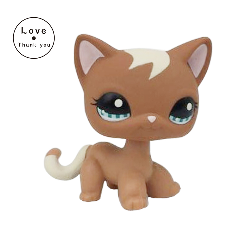pet Shorthair Cat #1170 Brown White Cat Curl With Blue Eyes Animals Figure genuine pet shop 577 brown white