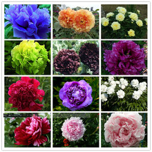 15pcs/ peony seeds. Paeonia suffruticosa 12 colors indoor bonsai flower seeds for Home garden plant  peony flower seeds