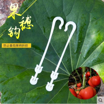 100 kosov Ušesne kljuke Rastlinjak paradižnik ušesni kavelj - Vrtne potrebščine