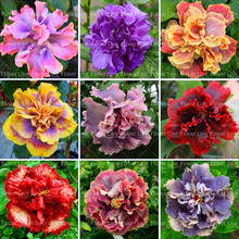 100PCS Giant Double Hibiscus Beautiful Bonsai Flower Perennial Plants Potted Flower For Home Garden Planting стоимость