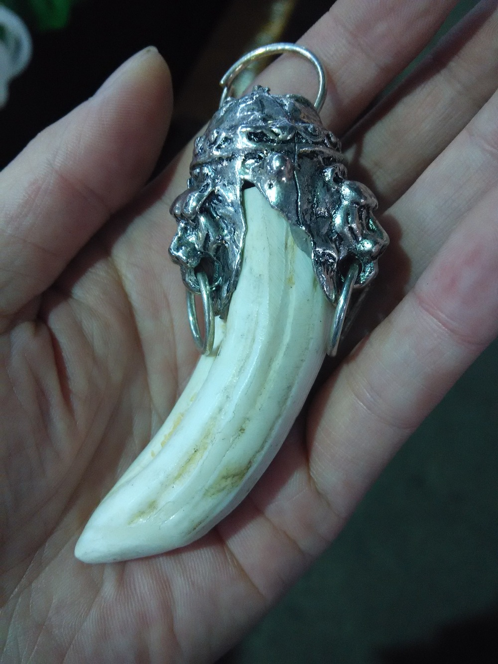 Rare old silver inlay bear tooth collection free shipping|tooth| |  - title=