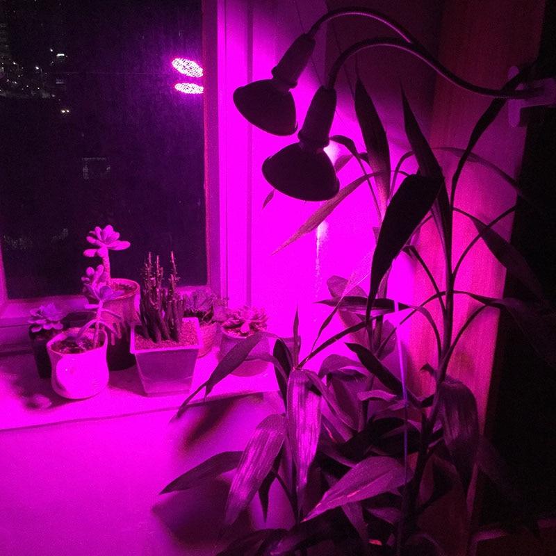 flor crescer lampada de luz vermelho azul 05
