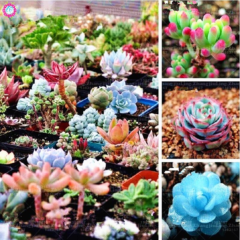 200 Pcs/bag Mixed Succulent Seed Home Garden Bonsai Decoration Indoor Flower Plant Seeds