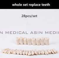 2017 הגעה חדשה מודל שיני להחליף חילוף כל להגדיר 28 יחידות שיניים מודל הוראת שיניים מודל למידה