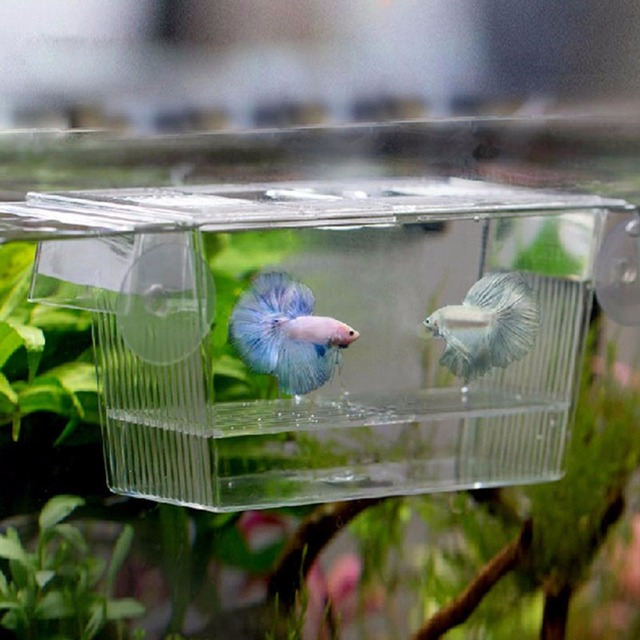 Aquarium Transparent Double Bowl Fighting Fish Mini House Incubator Box For Fry Isolation Hatchery Reptile Cage Turtle House