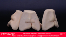 DENTAL TEACHING MODEL,ADULT DENTAL TEETH MODEL,ANATOMIACL TOOTH MODELS,MOUTH ORAL CARE ,CLEFT LIP STITCHED MODEL-GASEN-DEN0020