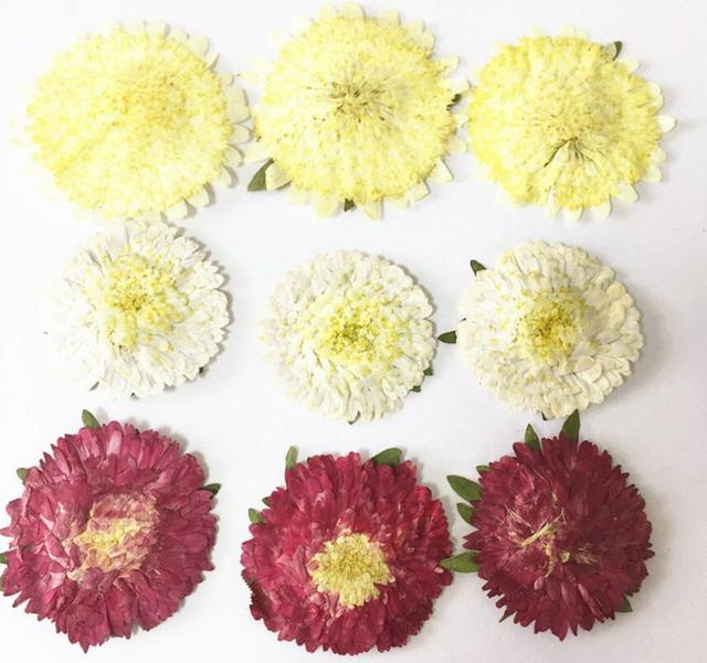 60pcs pressed dried 2 4cm yellowwhitewine red daisy flower plant 60pcs pressed dried 2 4cm yellowwhitewine red daisy flower plant herbarium mightylinksfo