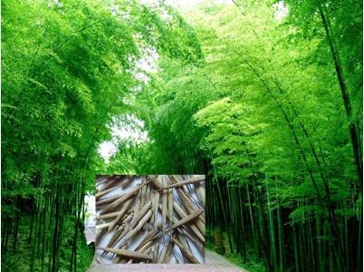 Cinese pianta di bamb promozione fai spesa di articoli in for Semi di bambu