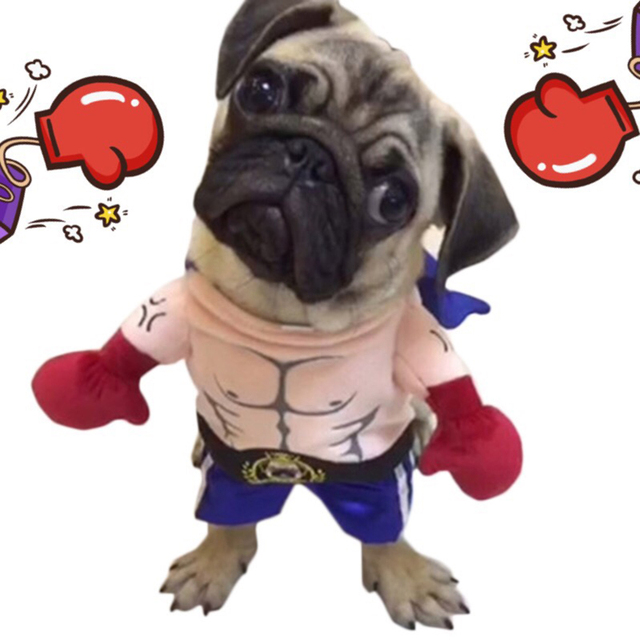 Funny Cat or Dog Boxer Costume for your next Instagram and Facebook shootings