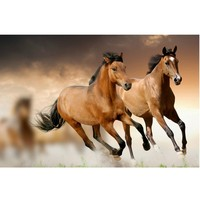 5D diy diamond painting kits for cross stitch pictures of rhinestones diamond embroidery horses hobbies and crafts