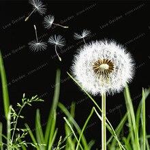 100 Pcs Beautiful Dandelion Bonsai Taraxacum Mongolicum Flower