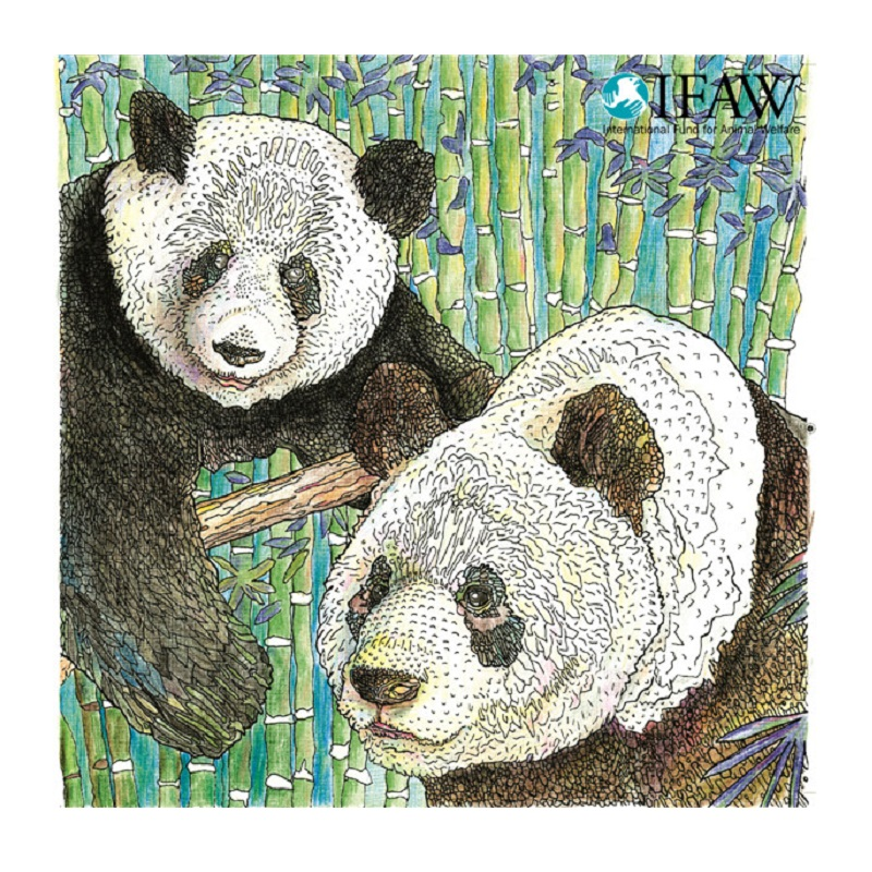 9 Most Endangered Rainforest Animals Coloring Pages | Animal Jr. | 800x800