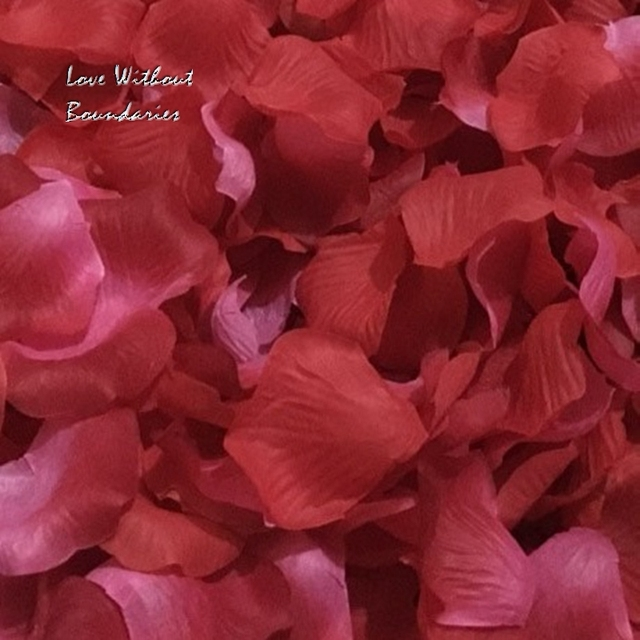 Rose Petals Celebration Petals Wedding Graduation Valentine S