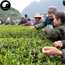 Buy Wuyi Black Tea Tree Seeds 120pcs Plant Wu Yi Black Tea For Lapsang Souchong(China)