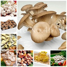 Sale! 100 Pcs Delicious White Mushroom Bonsai, Green Vegetables Organic Funny Succulent Happy Farm Plant Easy To Grow For Home(China)