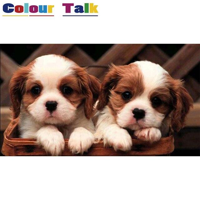Масло номер живопись каллиграфии для Гостиная настенная живопись по номерам фотографии плакат обои рисунок Товары для собак Щенок p-0035