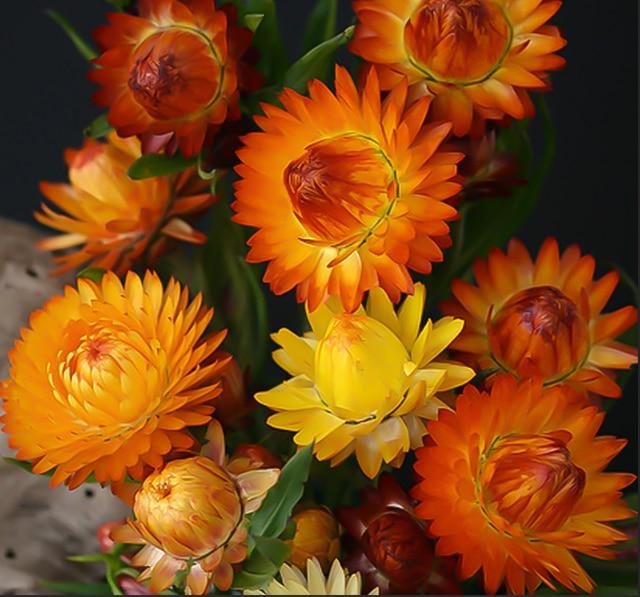 250 pcs Gốc Hoa Cúc Mùa Xuân Sáp Hoa Cúc Cảnh Hoa Làm Vườn Vườn Hoa Trồng Trong Chậu Xem