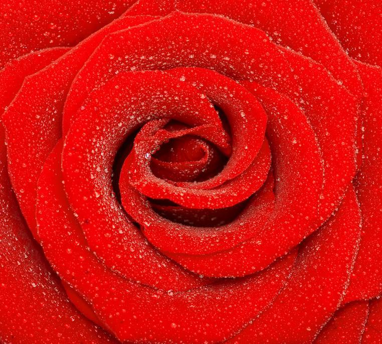 3d Flower Wallpaper Ceilings Romantic Beautiful Red Rose