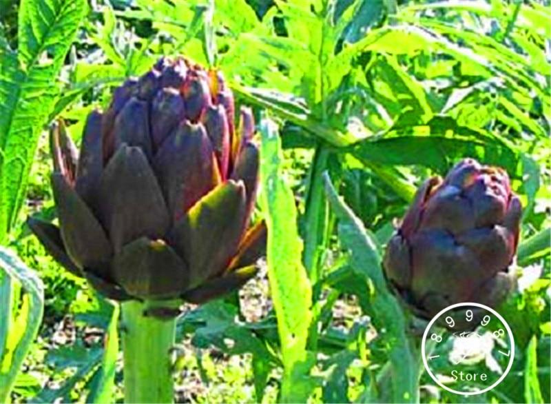 100 pcs zak verkoop! artisjok bonsai gemakkelijk te kweken, bloemen in potten voor bloemen voor thuis, tuinplant