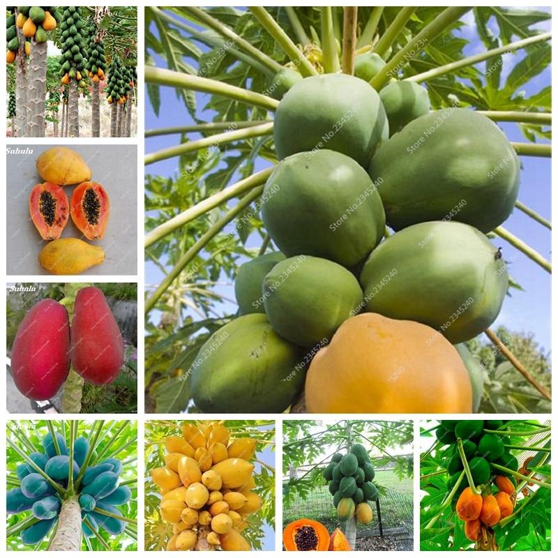 100% верно японский папайи дерева органических папайя бонсай для огород плодовых растений 50 шт./пакет открытый тропические фрукты